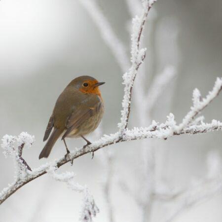 Minimal risk of frost damage